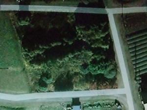 森トリミング.jpg